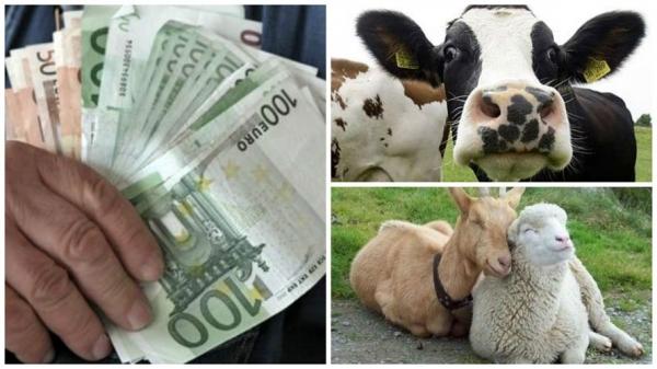 colaj-plata-animale_b