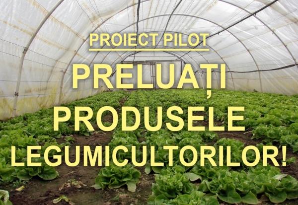 proiect pilot timis_b