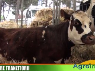 Jurnal de stiri AGROINFO TV - 11.10.2014